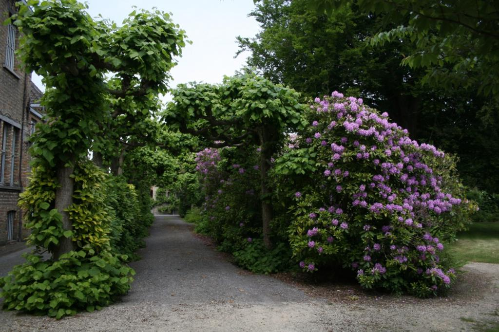 One of the covered walks in the garden